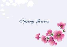 Women`s Day banner pink flowers vector background. Beautiful pink flowers background.Women`s Day design banner.flower Stock Photos