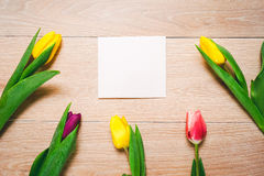 Women`s day 8 march background with spring flowers. Tulips spring frame  on bright background Royalty Free Stock Photos
