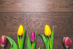 Women`s day 8 march background with spring flowers. Tulips spring frame  on bright background Stock Image