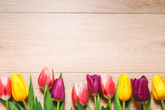 Women`s day 8 march background with spring flowers. Tulips spring frame  on bright background Royalty Free Stock Photo