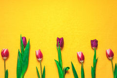 Women`s day 8 march background with spring flowers. Tulips spring frame  on bright background Royalty Free Stock Image