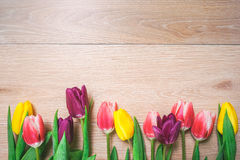 Women`s day 8 march background with spring flowers. Tulips spring frame isolated on bright background Royalty Free Stock Photos