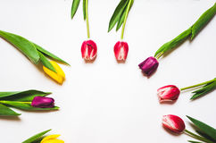 Women`s day 8 march background with spring flowers. Tulips spring frame isolated on bright background Stock Photo
