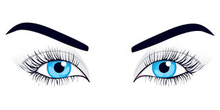 Women's eyes. Vector illustration. Stock Photo