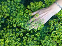 Women's hand and flowers Stock Photos