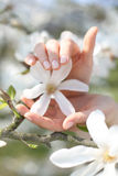 Women's hands, delicacy Royalty Free Stock Image