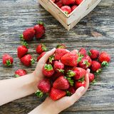 Women`s hands hold a handful of fresh ripe strawberries. Organic juicy berries macro stock photo