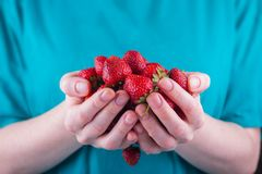 Women& x27;s hands hold a handful of strawberries stock images