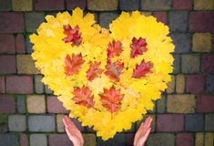 Women`s hands hold a heart of yellow and red maple and oak leaves.  stock photography