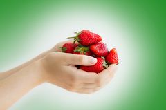 Women`s hands holding a large handful of ripe strawberries Stock Image