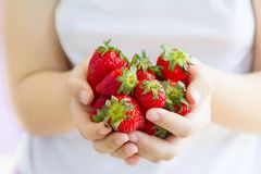 Women`s hands holding a large handful of ripe strawberries Stock Photo