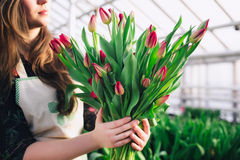Women's hands holding pink tulips, close-up. In greenhouse Stock Photo