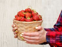 Women`s hands are holding a wicker basket of ripe strawberries on a light wooden background Royalty Free Stock Photo