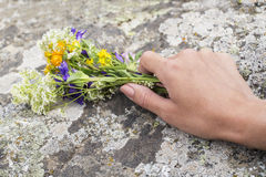 Women`s hands holding wild flowers. On a background of stone Stock Image