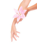 Women's hands with pink lily Royalty Free Stock Images