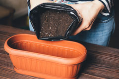 Women's hands poured soil in the pot for growing plants Stock Image