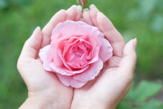 Women S Hands With A Rose Royalty Free Stock Photos