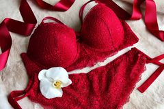 Women`s lace sexy underwear of red, wine color: bra and panties. Lingerie Royalty Free Stock Images