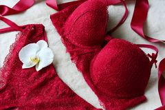 Women`s lace sexy underwear of red, wine color: bra and panties. Lingerie Royalty Free Stock Image
