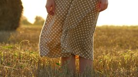 Women`s legs close-up on a wheat field. A light breeze moves dress girl in slow motion. Close up stock footage