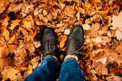 Women's legs in dark shoes standing on a yellow fall maple leaves to autumn park Stock Photos