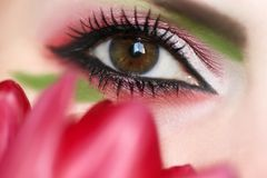 Women`s makeup brown green eyes . royalty free stock image