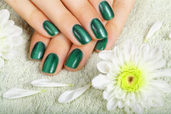 Women's manicure with effect of cat's-eye gel polish. Stock Image