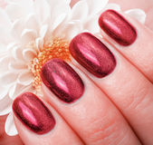 Women's manicure with effect of cat's-eye gel polish. Royalty Free Stock Image