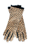 Women's new gloves leopard Royalty Free Stock Photography