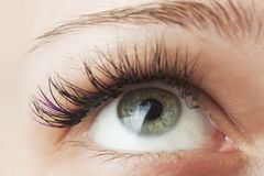 Women's Open eyes. From close up Royalty Free Stock Images