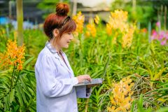 Women`s Orchid Researchers are exploring and documenting the characteristics of orchids in garden. Women`s Orchid Researchers are exploring and documenting the stock photography