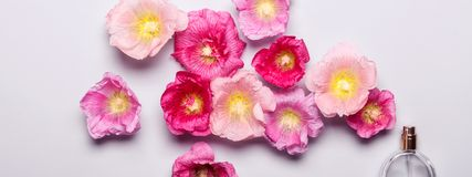 Women`s perfume bottle and pink mallow flowers. Minimalism beaut. Y concept Stock Photo