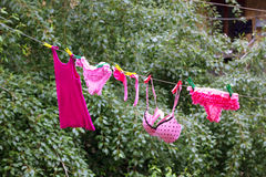 Women's pink underwear dries. Royalty Free Stock Photo