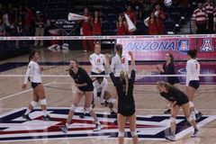 Women's volleyball players celebrate after a score Stock Images