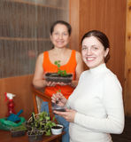 Women with  seedlings Royalty Free Stock Photo