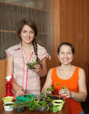 Women with  seedlings Stock Photos