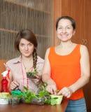 Women with  seedlings Stock Photography