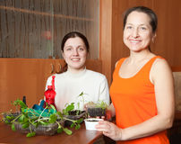 Women with  seedlings Royalty Free Stock Photos