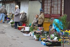Elderly women sell flowers at the Kalvariju market in Vilnius, Lithuania Royalty Free Stock Photo