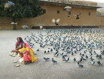 Women Selling Birdseeds, Jaipur, India Royalty Free Stock Images