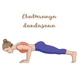 Women silhouette. Four-Limbed Staff Pose. Low Plank yoga pose. Chaturanga Dandasana. Vector illustration Stock Photography