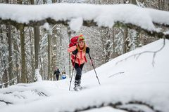 Women ski touring, late Winter - early Spring, in the Carpathian mountains, Romania. Girls with skis, backpacks, and poles. Women ski touring, late Winter royalty free stock image