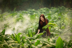 Women smart farming Laos women stock images