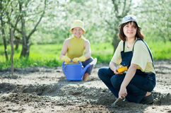 Women sows seeds in soil. Two women sows seeds in soil at garden Royalty Free Stock Images