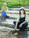 Women sows seeds in soil Stock Photography