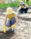 Women sows seeds in soil Stock Photo