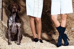 Women standing, lower part photographed to the waist, sitting next to a german short-hair hunting dog. Two women standing, lower part photographed to the waist stock image