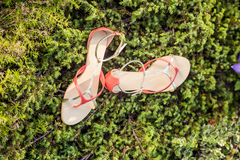 Women summer sandals lie on the grass. A Royalty Free Stock Photos