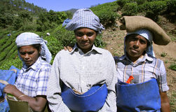 Women at tea plantation Stock Photos