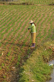 Women tend their crops Stock Photos